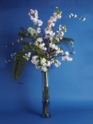 Cherry branches in Bamboo Vase