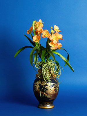 Orchids in Chinese Urn