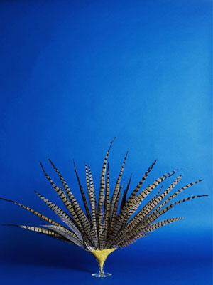 Sashas Feathers